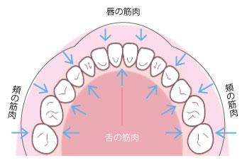 歯並びを決めるものは?